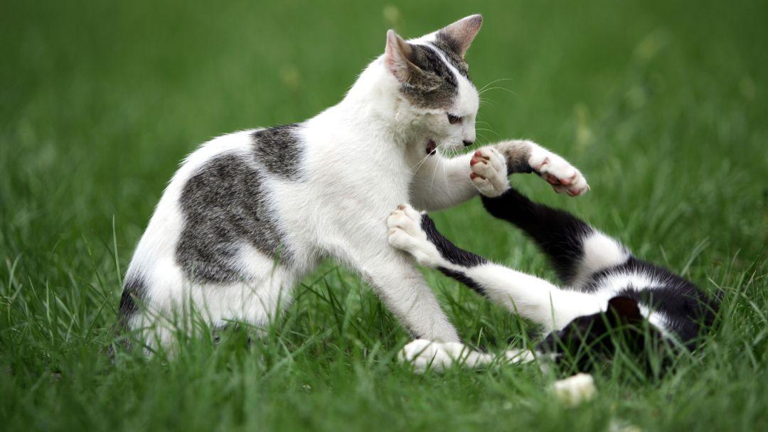 Kat og kat imellem – om konflikter mellem katte