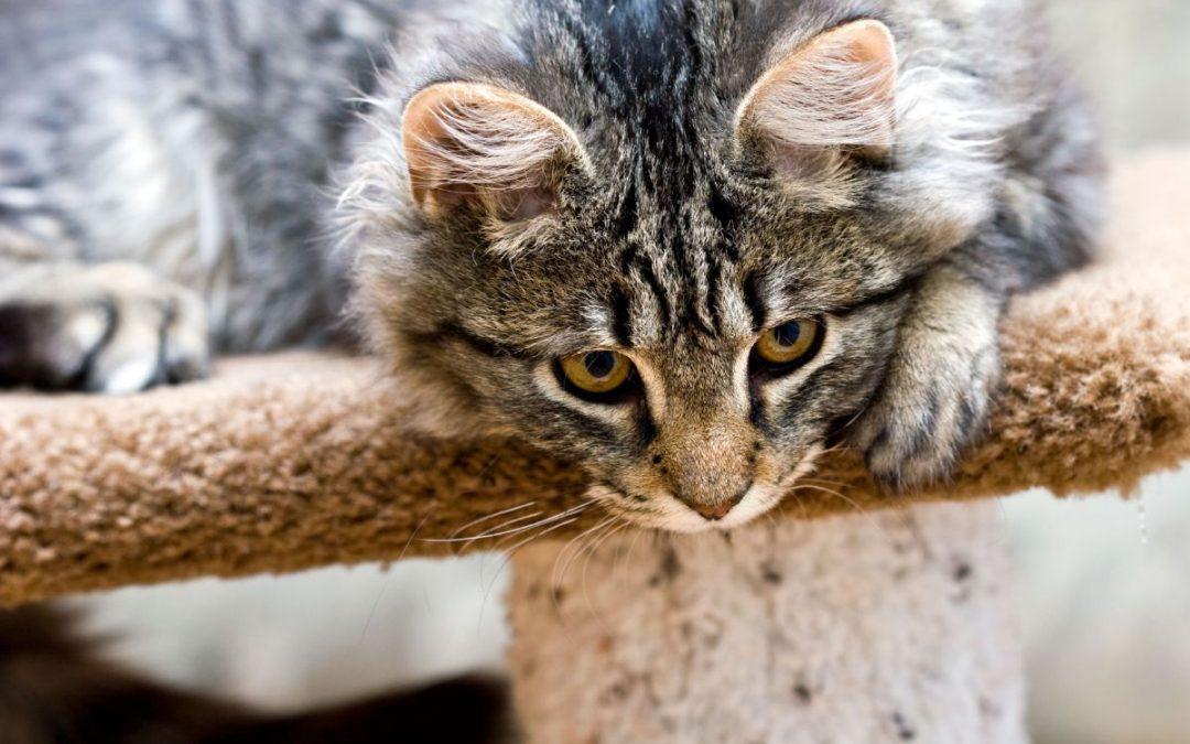 Den urenlige kat