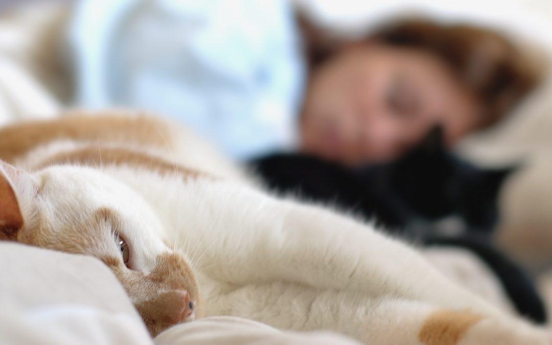 Kattens forhold til sin ejer