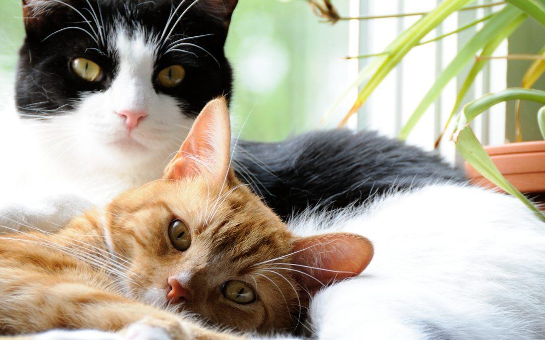 En eller flere katte?