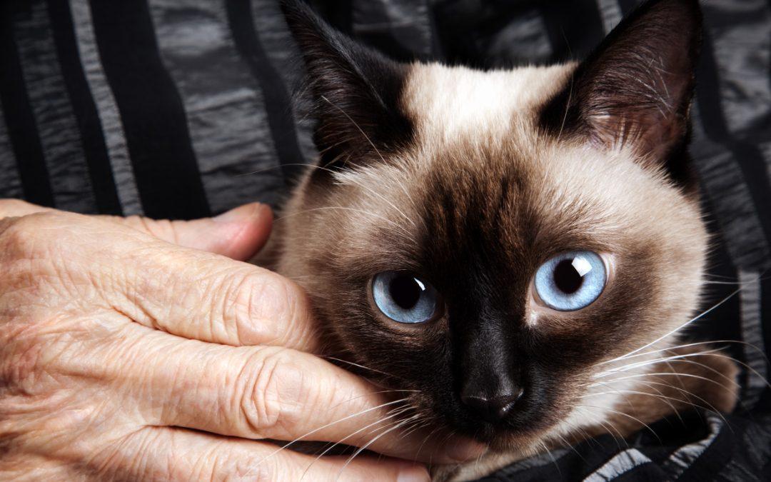 Hundemennesker kan sagtens blive kattemennesker
