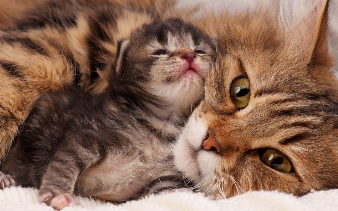 Vælg den rigtige kattekilling